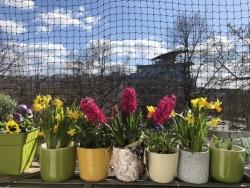 Frühling hinter Corona Gittern