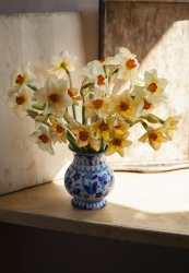 Daffodils and Sunlight