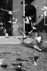 Pigeons need food, too