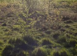 Golden hour on grass